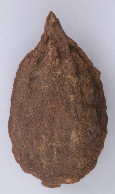 Petrified Lemon