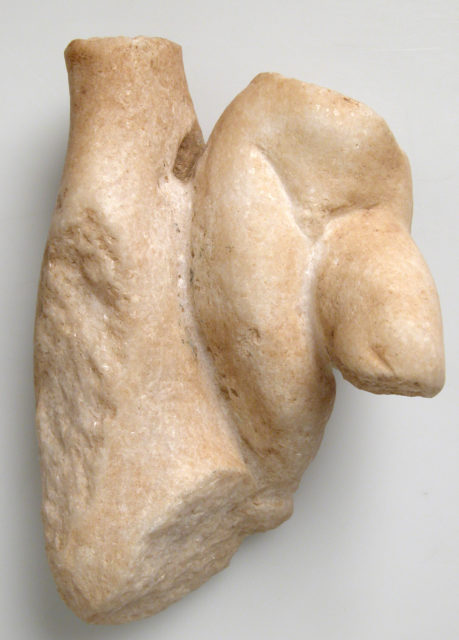 Fragment of a Male Torso with a Tree Trunk