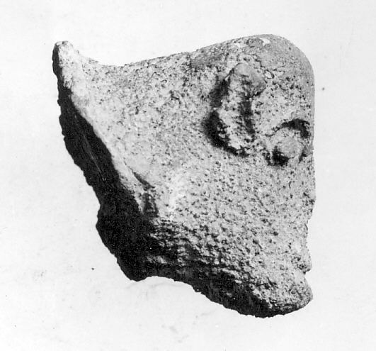 Head of Sheep(?)
