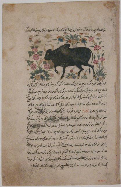 """""""A Bull"""", Folio from a Dispersed Nuzhatnama-i 'Ala'i of Shahmardan ibn Abi'l Khayr"""