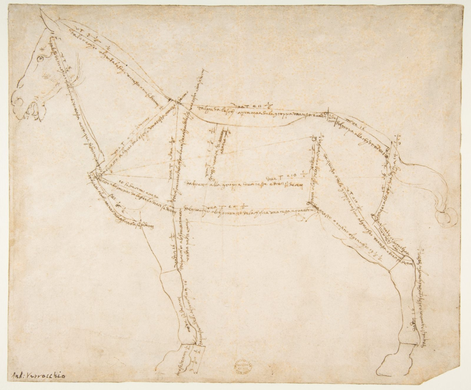 Measured Drawing of a Horse Facing Left (recto).