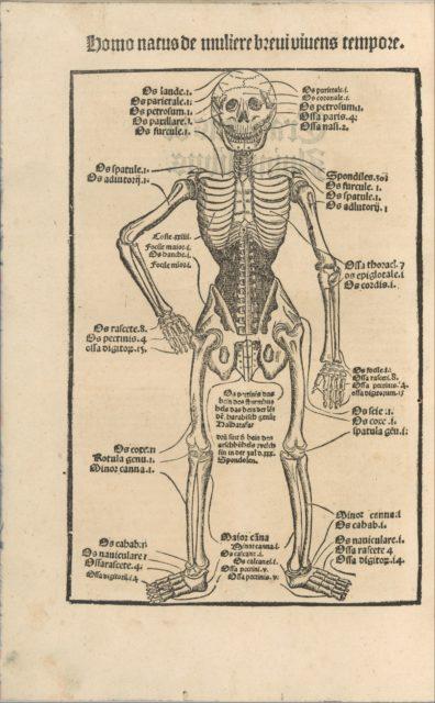 Ortus Sanitatis/ De herbis et plantis/ De Animalibus & reptilibus ...