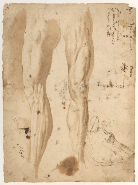 Studies of the Leg of a Man and a Horse's Head (recto); sketches of the back of a man's left shoulder and a chained (?) figure.