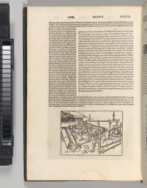 Di Lucio Vitruvio Pollione De architectura Libri Dece traducti de latino in vulgare affigurati: commentati: & con mirando ordine insigniti