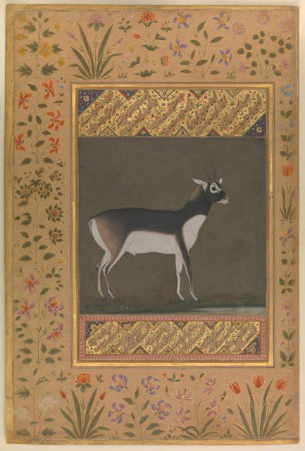 """Black Buck"", Folio from the Shah Jahan Album"