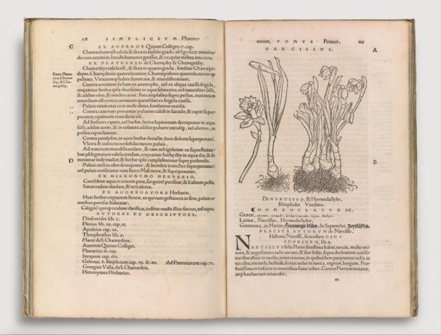 Herbarum vivae eicones