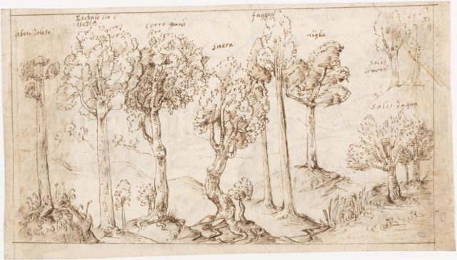 Recto: On Timber, the Species of Trees (Vitruvius, Book 2, Chapter 9, no. 4); Verso: On Timber, the Battle of Larignium (Vitruvius, Book 2, Chapter 9, no. 15)..