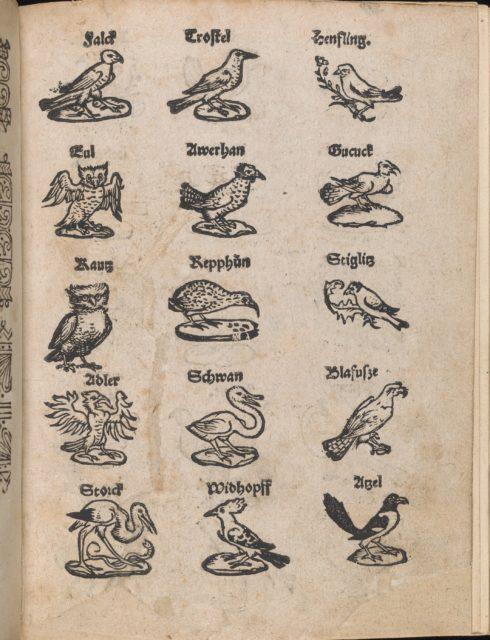 Modelbuch aller Art Nehens vn Stickens (Page 13r)