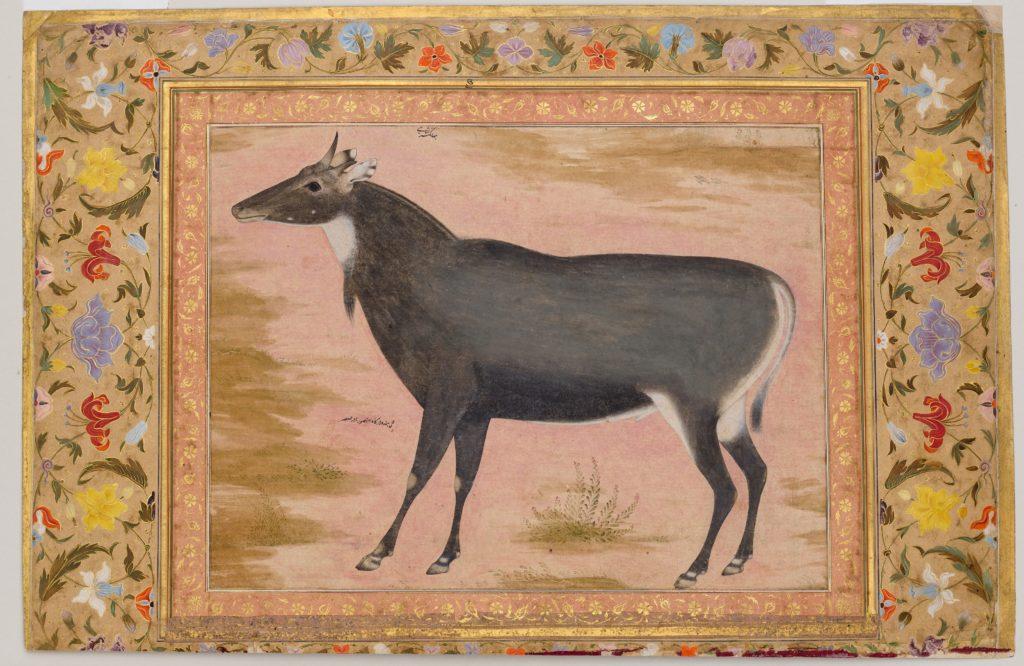 """Study of a Nilgai (Blue Bull)"", Folio from the Shah Jahan Album"