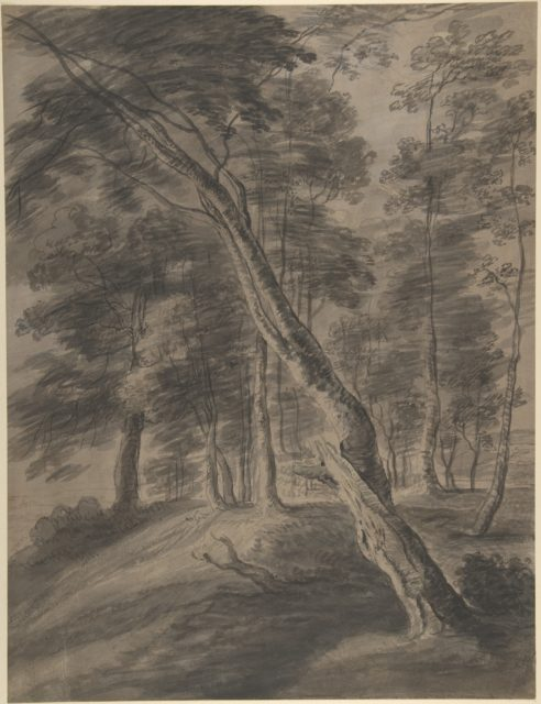 Forest Scene with Tree in Foreground