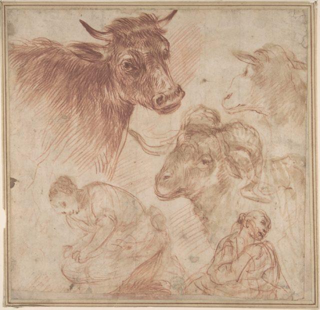 Studies of Animal Heads and Figures