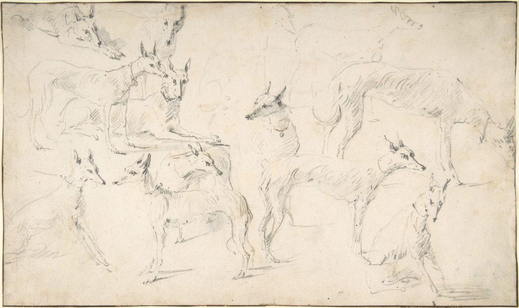 Studies of Hounds