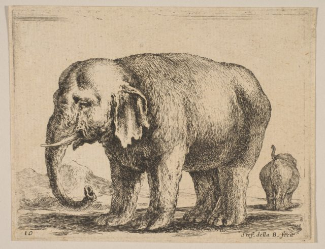 Plate 10: elephant, from 'Various animals' (Diversi animali)