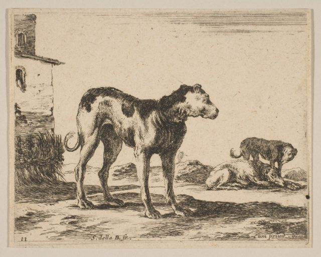 Plate 11: dogs, from 'Various animals' (Diversi animali)