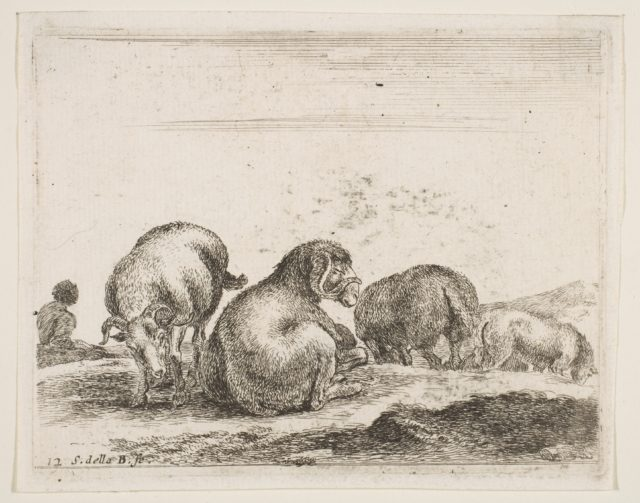 Plate 12: sheep and ram in a pasture, from 'Various animals' (Diversi animali)