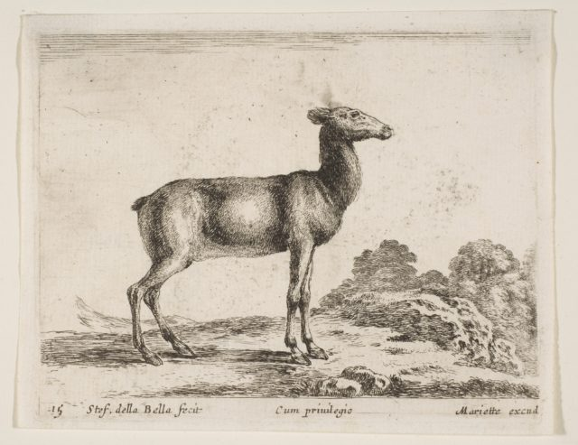 Plate 15: doe, from 'Various animals' (Diversi animali)