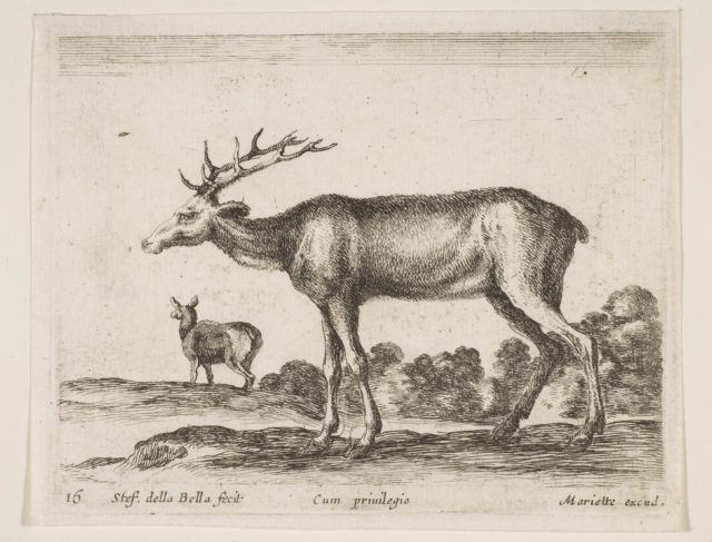 Plate 16: stag, from 'Various animals' (Diversi animali)