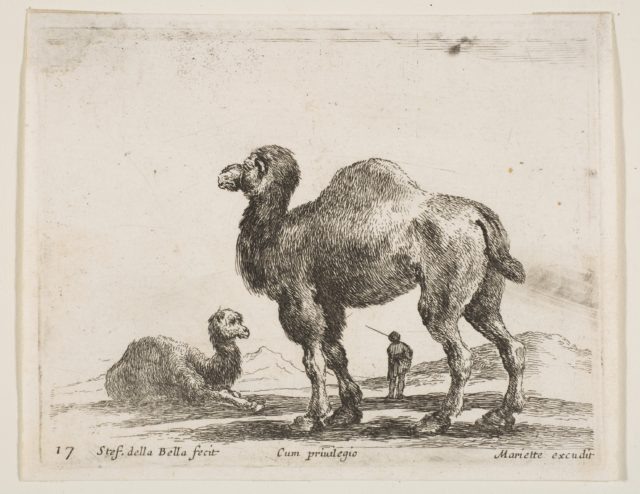 Plate 17: camels, from 'Various animals' (Diversi animali)