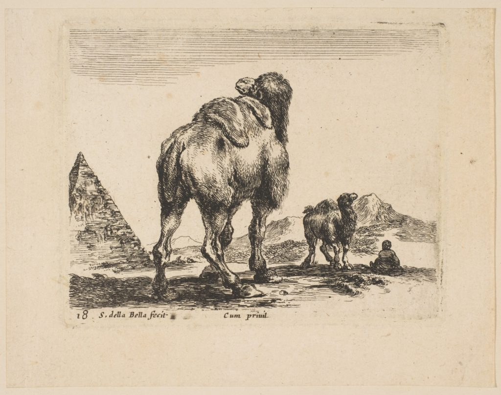Plate 18: camel viewed from behind with pyramid at left, from 'Various animals' (Diversi animali)