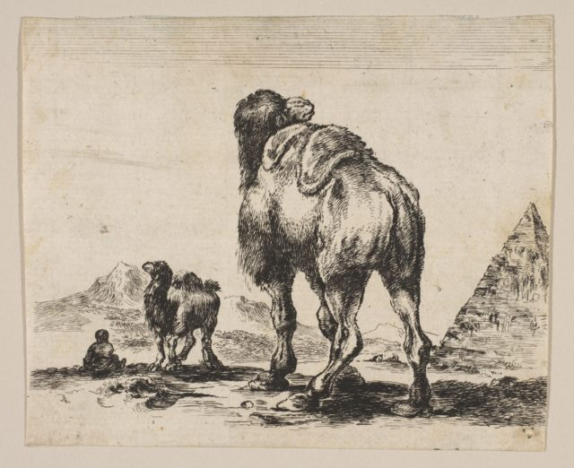 Plate 18: camel viewed from behind with pyramid at right, from 'Various animals' (Diversi animali)
