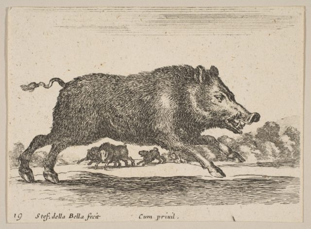 Plate 19: wild boar, from 'Various animals' (Diversi animali)