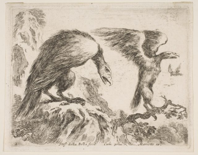 Plate 2: eagle and eaglet, from 'Various animals' (Diversi animali)
