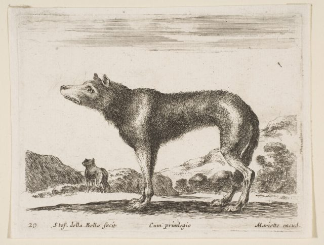 Plate 20: wolf, from 'Various animals' (Diversi animali)