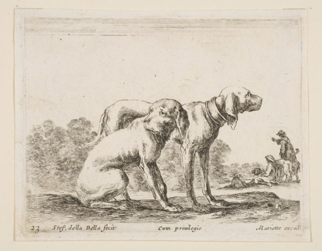 Plate 23: two hounds, from 'Various animals' (Diversi animali)