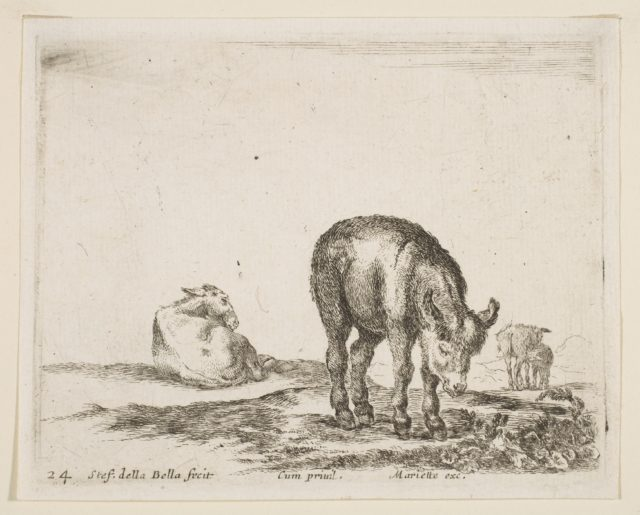 Plate 24: donkeys, from 'Various animals' (Diversi animali)