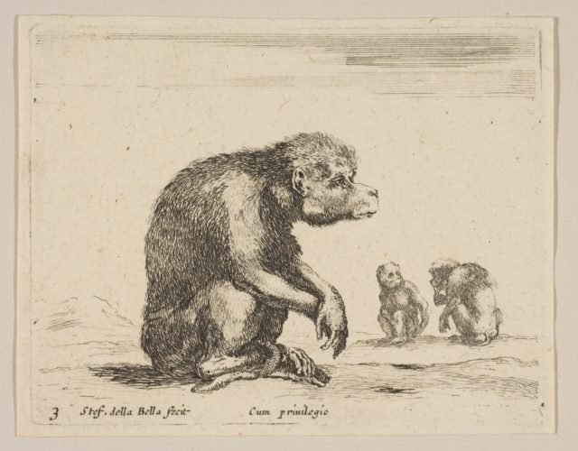 Plate 3: seated monkey, from 'Various animals' (Diversi animali)
