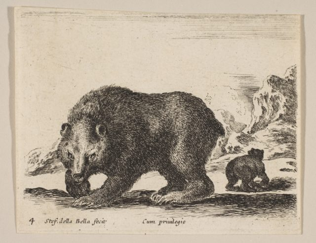 Plate 4: bear, from 'Various animals' (Diversi animali)