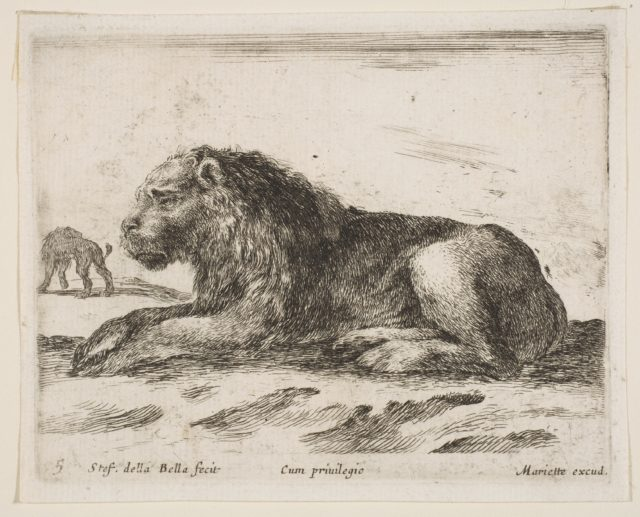 Plate 5: reclining lion, from 'Various animals' (Diversi animali)