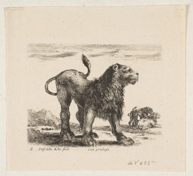 Plate 6: lion, from 'Various animals' (Diversi animali)