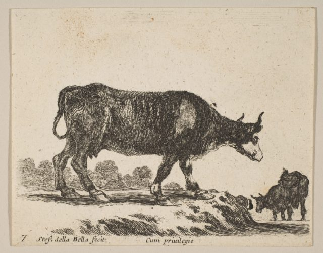 Plate 7: cow, from 'Various animals' (Diversi animali)