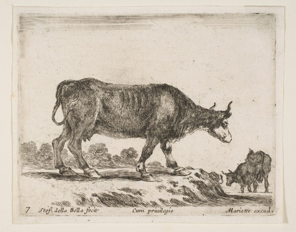 Plate 7: ox, from 'Various animals' (Diversi animali)