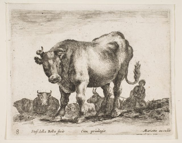 Plate 8: cow, from 'Various animals' (Diversi animali)