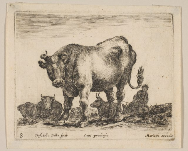 Plate 8: ox, from 'Various animals' (Diversi animali)