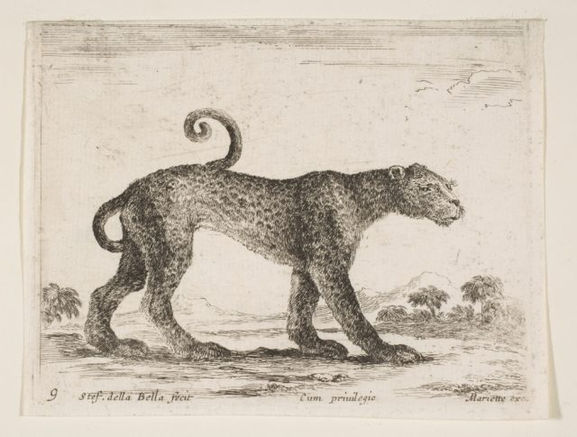 Plate 9: leopard, from 'Various animals' (Diversi animali)