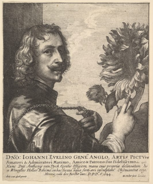 Sir Anthony van Dyck with a sunflower