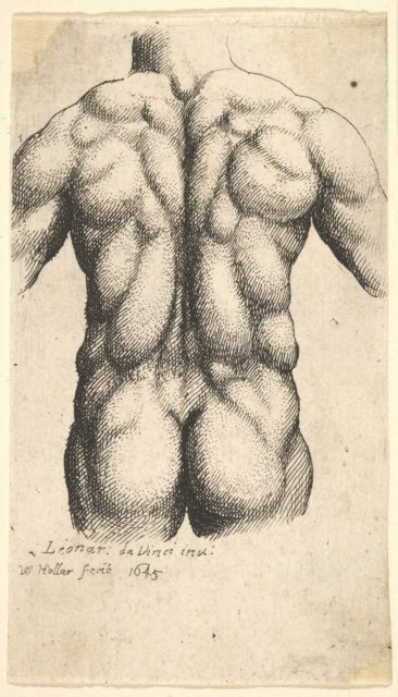 Naked male torso seen from behind