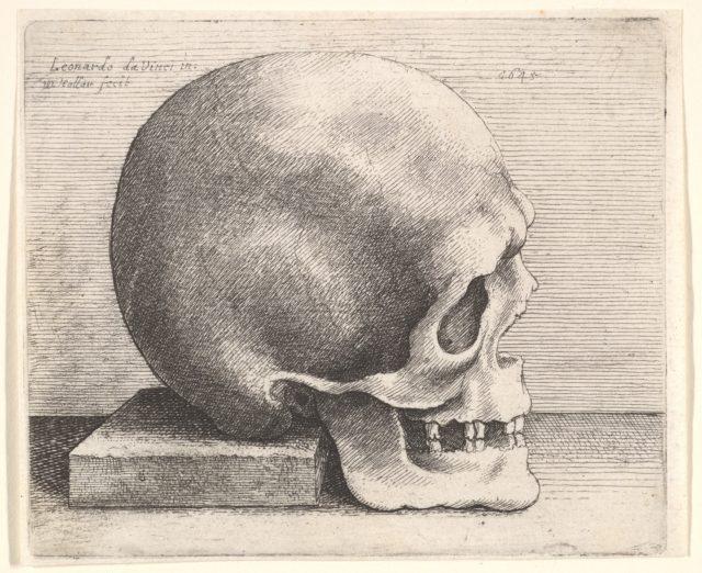 Skull in profile to right