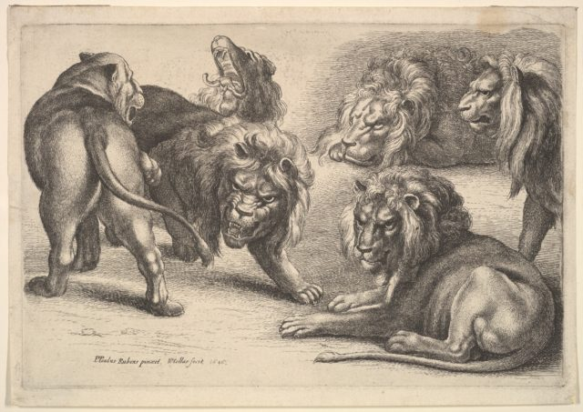 Five Lions and a Lioness