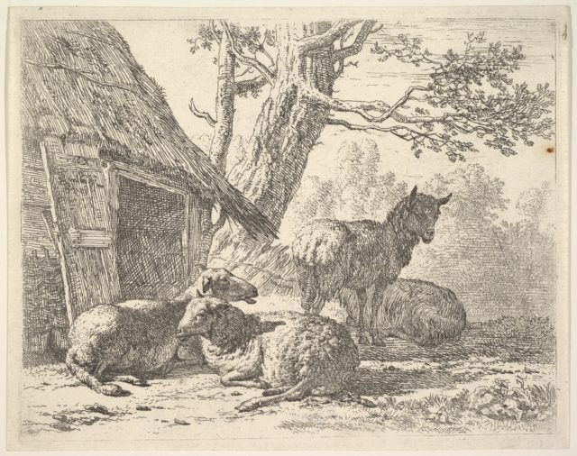 Four sheep, one sheep stands among three others lying on the ground next to a shed with thatched roof and open door