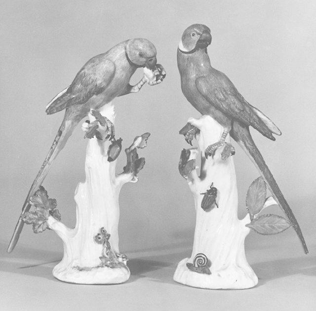 Parakeet (one of a pair)