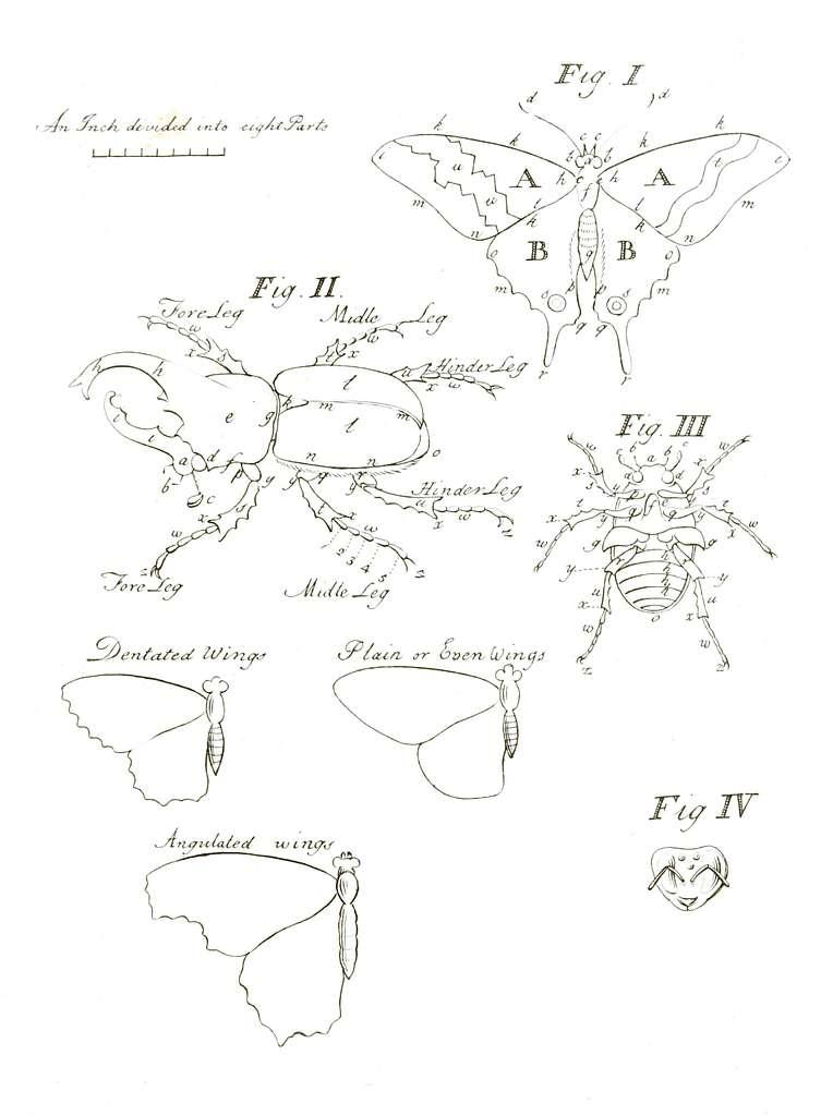 Illustrations of Exotic Entomology Figs