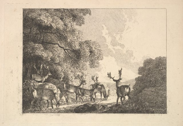 A Group of Stags Drinking