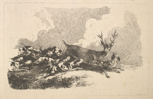 Hounds Hunting a Stag