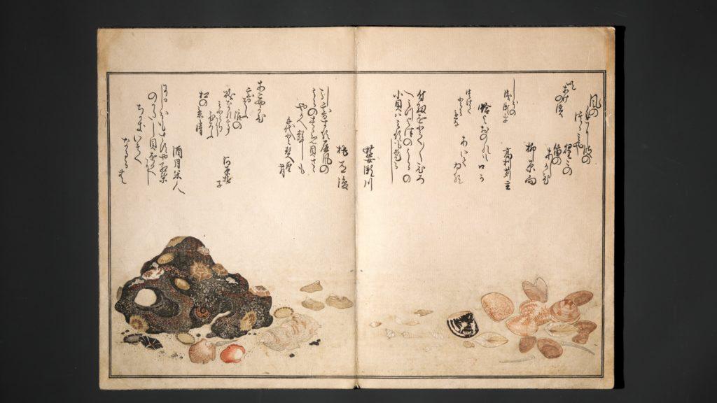 Gifts of the Ebb Tide (The Shell Book) (Shiohi no tsuto)