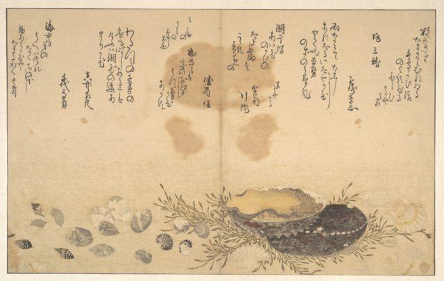 Shells Under Water