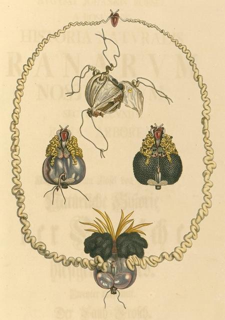 Historia naturalis ranarum nostratium 1758 a